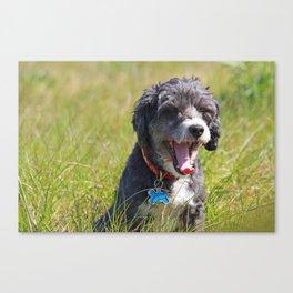 Cute Puppy Yawning Canvas Print