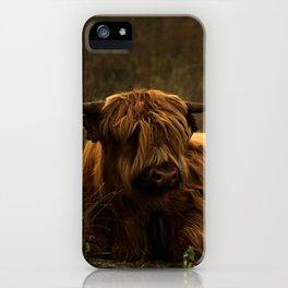 Scottish Highland hairy cow iPhone Case
