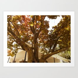 LOOKING UP COLOR Art Print