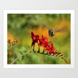 Hummingbird Materializing Art Print