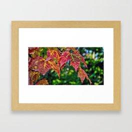 Colors Of The Season -Autumn Framed Art Print