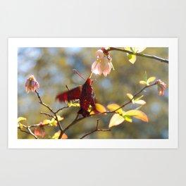 Hummingbird Moth feed on blueberry bloom nectar Art Print