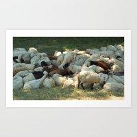 sheep Art Prints featuring Sheep by Vlad&Lyubov