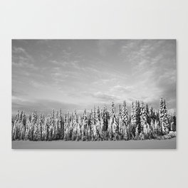 Spruce After Snow Storm Canvas Print