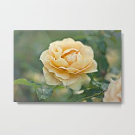 Little Rose Metal Print