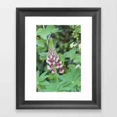 Pink finger flower Framed Art Print