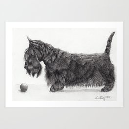 Scottish terrier Art Print