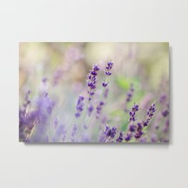 Lavender Loveliness Metal Print