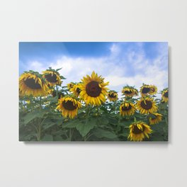 Nodding Sunflowers Metal Print