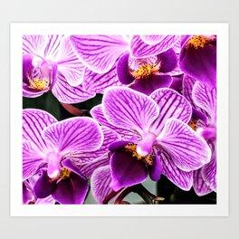 Purple Orchids Art Print