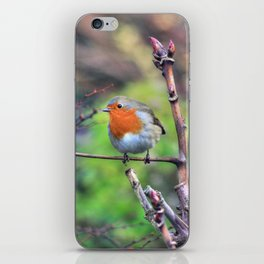 Garden Robin iPhone Skin