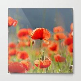 Red Poppies Flowers Metal Print
