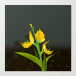 Yellow Fabaceae Canvas Print