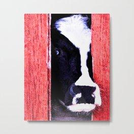Black and White Cow Peeking thru the Red Barn Door Metal Print