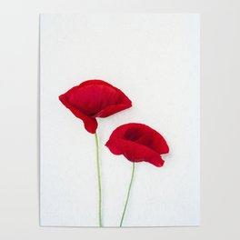 Two Red Poppies Poster