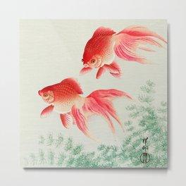 Two veil goldfish Metal Print