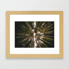 Redwood Fisheye Framed Art Print