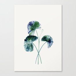 Water lily leaves Canvas Print