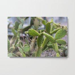 Cactus Spikes Plant Metal Print