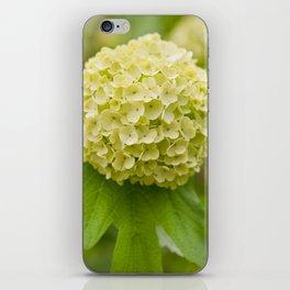 Viburnum opulus Roseum inflorescence iPhone Skin