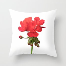 isolated red geranium in bloom Throw Pillow