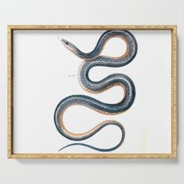 Vintage snake drawing antique art nouveau goth snake Serving Tray