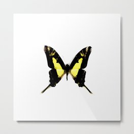 TropicalYellow Butterfly Painting Metal Print