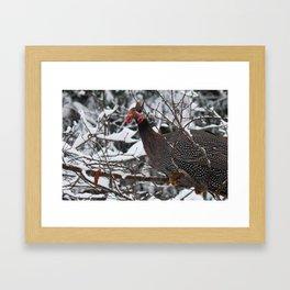 Guinea Fowl 2 Framed Art Print