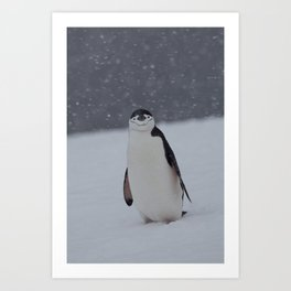 Penguin in the Snow Art Print
