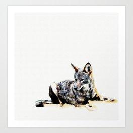 Wild Vermont Coyote Art Print