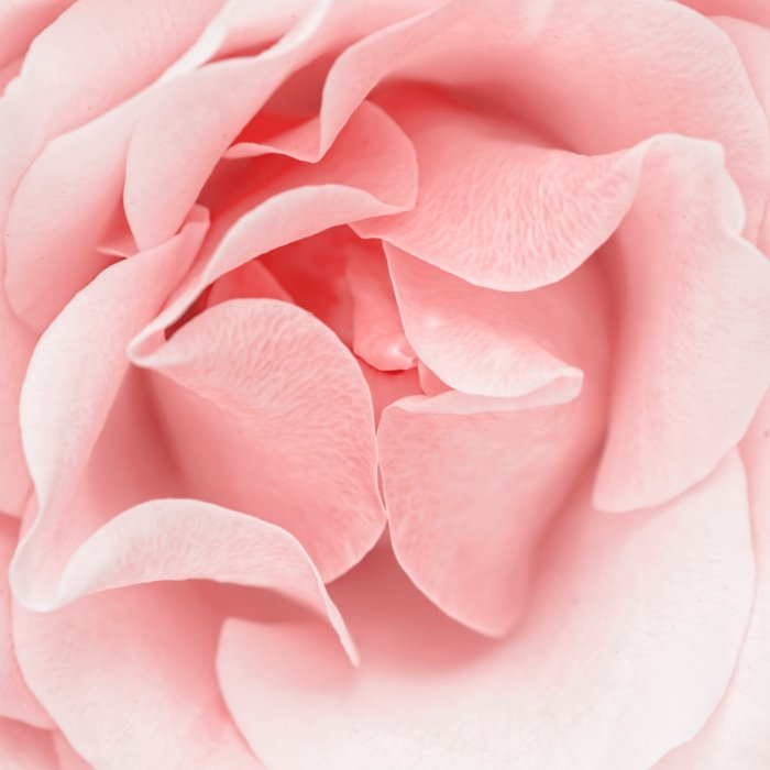 Pink flora Rose Bud- Roses and flowers Comforters