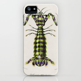Giant mantis shrimp (Squilla Maculata) illustrated by Charles Dessalines D' Orbigny (1806-1876). iPhone Case