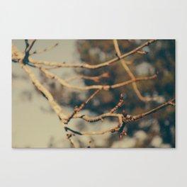Bare Branches Canvas Print