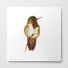 Volcano Hummingbird Metal Print