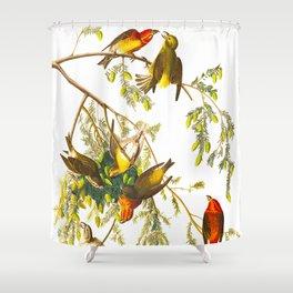 American Crossbill Vintage Bird Illustration Shower Curtain