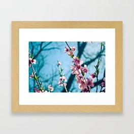 Spring has come Framed Art Print