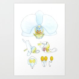 Orchid Dissection Art Print