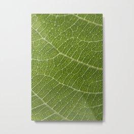 Fig tree leaf Metal Print
