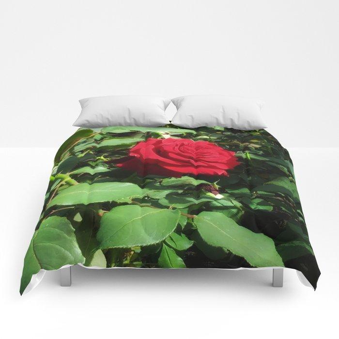 Deep Red Rose Comforters