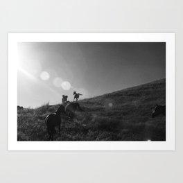 Horses Cantering Art Print