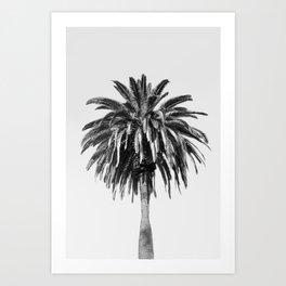 Palm Tree, Palm, Black and White, Tree, Tropical, Beach, Nature, Botanical, Monochrome, B&W, Outdoor Art Print