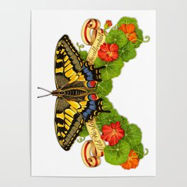 Old World Swallowtail Butterfly Poster