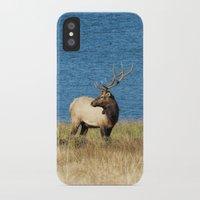 elk iPhone & iPod Cases featuring Elk by Becca Buecher