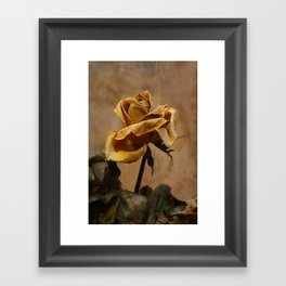 the last autumn rose  Framed Art Print