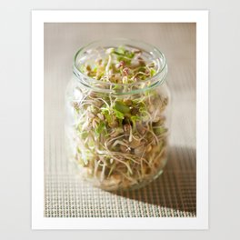 Many cereal sprouts growing Art Print