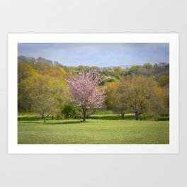 Tree with pink blossom Art Print