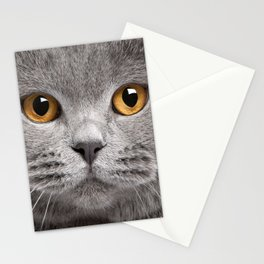 Cat in Grey Stationery Cards