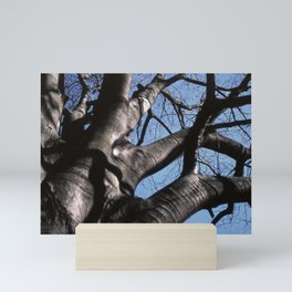 maple tree in winter Mini Art Print