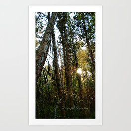 light and trees Art Print
