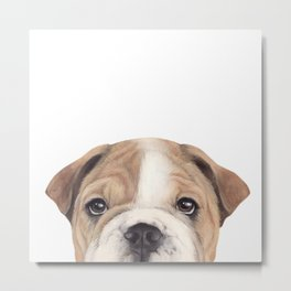 Bulldog Original painting Dog illustration original painting print Metal Print